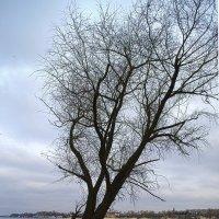 Одиноке дерево :: Дмитрий Гончаренко