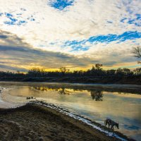 собака идущая берегом реки :: Владимир Бурдин
