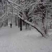IMG_4170 - февраль-2013 :: Андрей Лукьянов