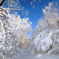 В лесу Малого Накаса... :: Константин Филякин