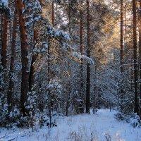 С лесными тайнами прощается декабрь... :: Лесо-Вед (Баранов)