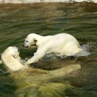 Игры в воде. :: Наталия Короткова