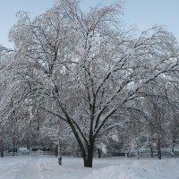 Зима в городе :: Damir Si