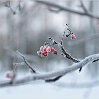 Зима,однако! :: Eino Pessi