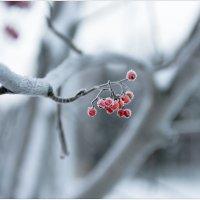Про пришедшую зиму :: Eino Pessi