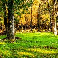осень самая красивая пора :: Людмила Бадина