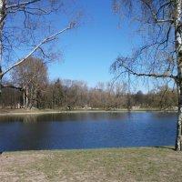 Весенний парк. :: Валентина Жукова