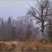 Одинокий дуб :: Елена Ерошевич