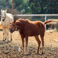 лошадь :: Павел Коротун