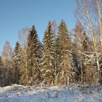 лес, освещенный солнцем :: Galina