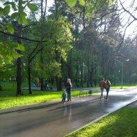 летний дождь :: Макс Манаков