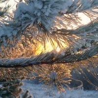 Сквозь солнце..... :: Павлова Татьяна Павлова