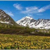 Лето в горах. :: Владимир