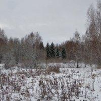 Прогулка в лес. :: Святец Вячеслав