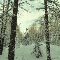 заснежье :: Михаил Жуковский