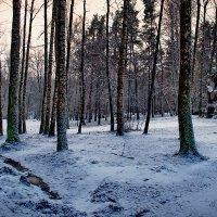 Зимний лес IV :: Георгий Столяров