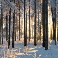 зима :: Екатерина Булыгина