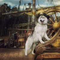 Пират :: Ершов Андрей