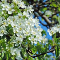 Весна в монастырском саду. :: Геннадий Александрович