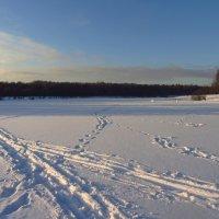 IMG_8758 - Изучаю следы на снегу :: Андрей Лукьянов