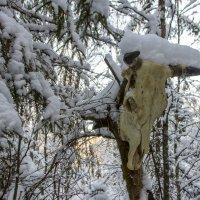 Заколдованный лес :: Татьяна Копосова