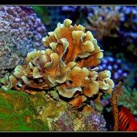 Подводный цветок :: Alexander Andronik