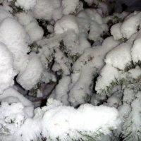 Пушистый снег :: Лариса Корженевская