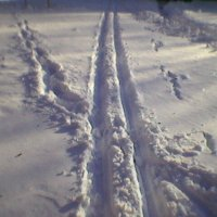 Лыжня :: Миша Любчик