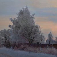 С Новым, 2015, годом! :: Юрий