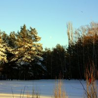 зима в парке :: Татьяна_Ш