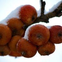 Зимние яблочки :: Владимир Максимов