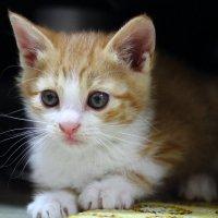 Кот с интересными глазами :: Ольга Нестеренко