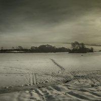 Собачка на снегу :: Вадим Губин