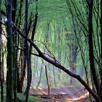 утро в лесу... :: юрий иванов