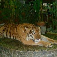 Спящий тигр. :: Чария Зоя
