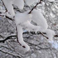 С Новым годом ! Зима пришла... :: Александр Резуненко