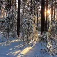 Заблудилось солнце в глухомани... :: Лесо-Вед (Баранов)