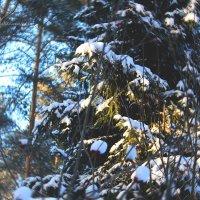 Зимний лес :: Кристина Щукина