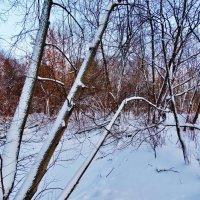 Зимняя графика :: Svetlana27