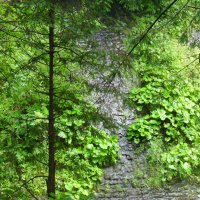 Горная  скала в  Карпатском лесу :: Андрей  Васильевич Коляскин