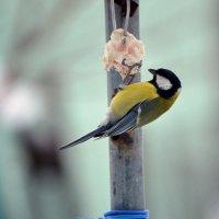 Птичка и сало :: Виталий Воронков