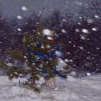 снегопад :: linnud