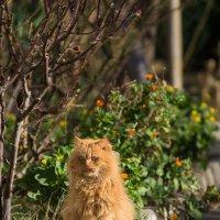 Кот, газон, бордюр :: Александр Земляной