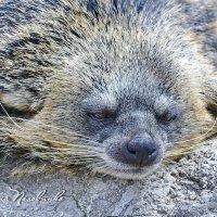 Мне еще взгрустнуть, или же заснуть ... :: Виталий Половинко