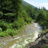 Горная  река  в  Карпатском  лесу :: Андрей  Васильевич Коляскин