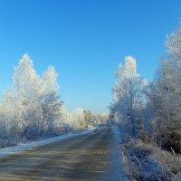 снежная дорога :: андрей ралько