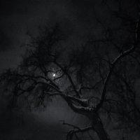 Mistic Tree :: Микто (Mikto) Михаил Носков