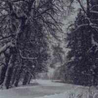 снегопад :: Ирина Кулагина