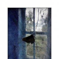 бабочка №13 :: sv.kaschuk