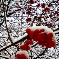 Белое и красное :: Николай Филоненко